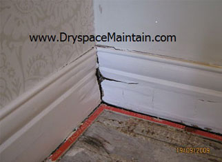 Dry rot damage to skirting boards