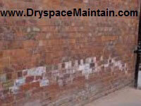 Rising Damp External