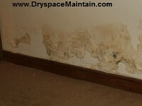Rising Damp Internal